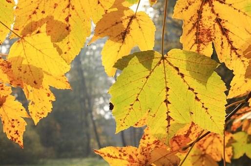 leaf-4574605__340.jpg